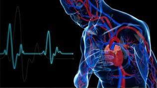 Eine Computeranimation zeigt den Ablauf eines Herzinfarktes