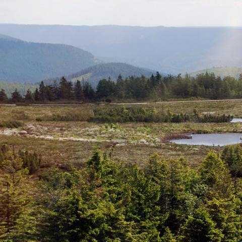Schwarzwälder Westweg (Foto: SWR, SWR -)