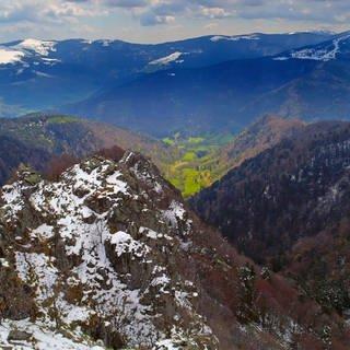Im Elsass trifft die Wärme und Farbenpracht des Mittelmeers auf ein eisiges Gebirge - und dessen Bewohner. (Foto: SWR)
