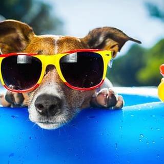 Ein Hund mit Sonnenbrille liegt im Swimmingpool (Foto: Getty Images, Thinkstock -)