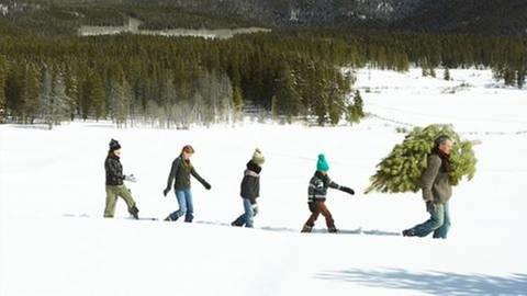Ein Vater und seine vier Söhne tragen einen frisch geschlagenen Baum aus einem verschneiten Wald.