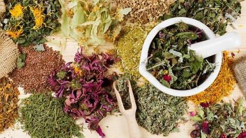 Heilpflanzen (Foto: Colourbox, Foto: Colourbox.de -)