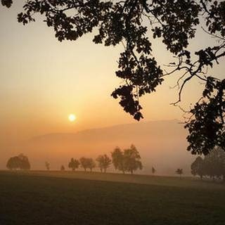 Morgenstimmung vor dem Aufstieg auf den Lemberg (Foto: SWR, SWR -)