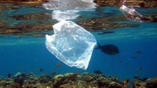Plastiktüte im Meer (Foto: picture-alliance / dpa, picture-alliance / dpa -)