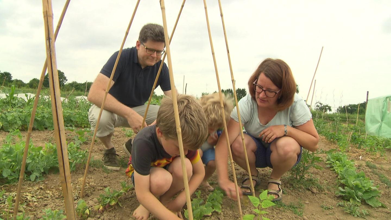 Familie Schulze aus Stuttgart baut Gemüse auf einem gemieteten Acker an.