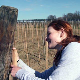 Betriebshelferin Chiara spannt ein Hagelnetz (Foto: SWR)