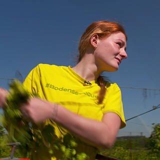 Betriebshelferin Chiara bei der Hopfenernte (Foto: SWR)