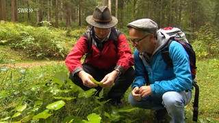 Zwei Männer suchen im Wald nach Wildkräutern (Foto: SWR)