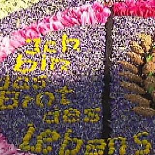 Blumenteppich für Fronleichnam (Foto: SWR, SWR -)