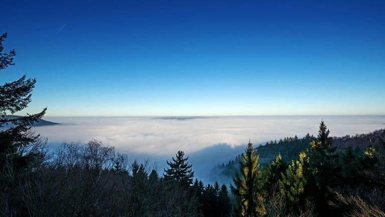 Dezember 2013, Detzem-Aussichtsturm, Wald Horizont Nebel Panorama (Foto: SWR, Gerd Keilen -)