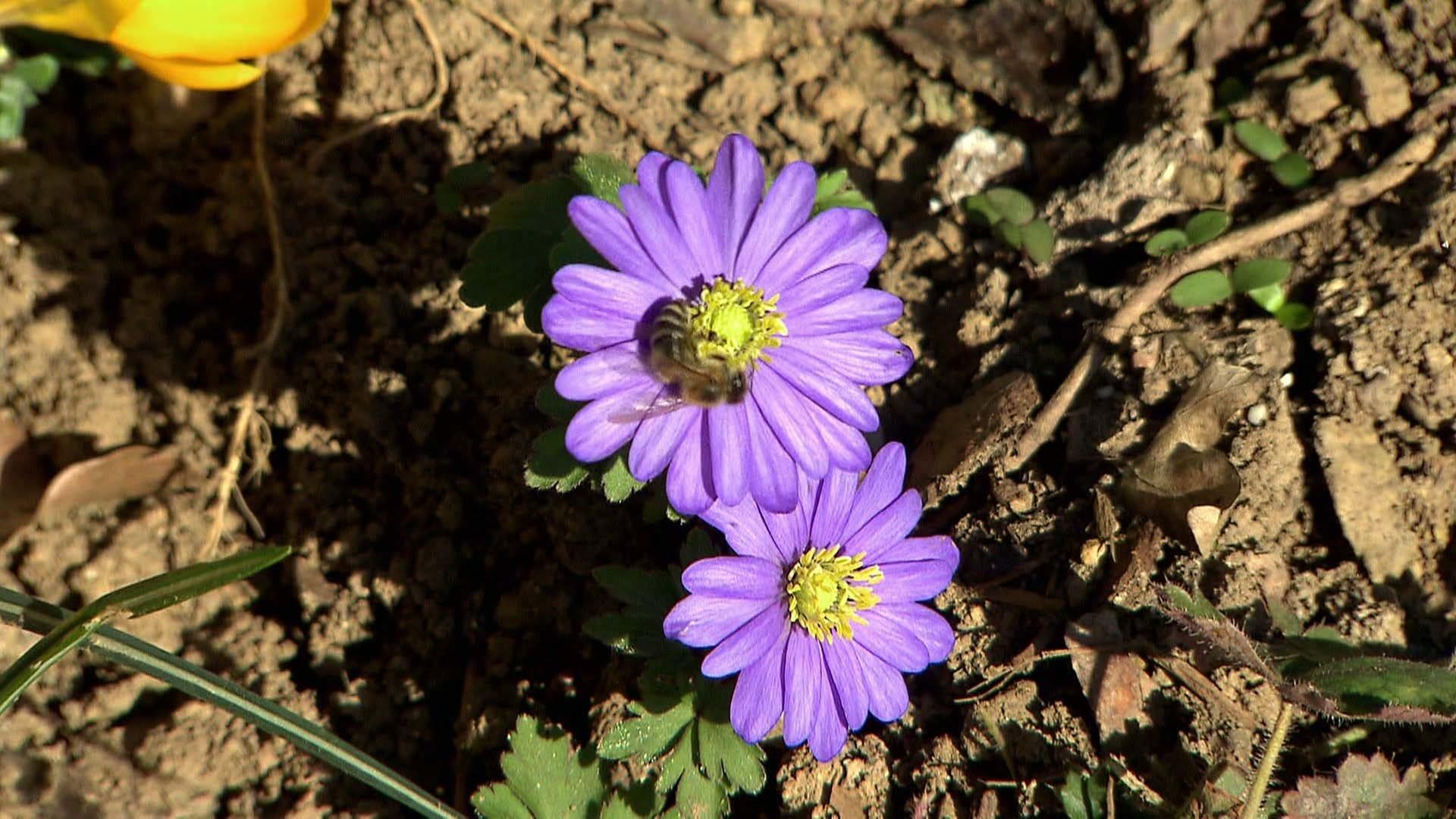 Im April Kommen Das Gemuse Und Die Blumen Ins Beet Landesschau Rheinland Pfalz Swr Fernsehen