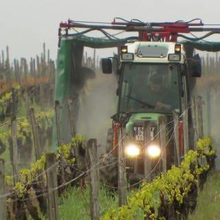 Traktor versprüht Pestizid im Weinbau (Foto: SWR)