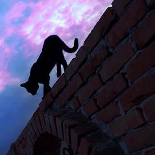 Katze auf Mauersims bei Nacht (Foto: SWR)