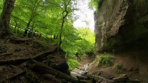 """Die Wanderchecker sind unterwegs auf dem """"Höhlen- und Schluchtensteig"""".  (Foto: SWR)"""