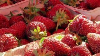 Erdbeeren (Foto: SWR)