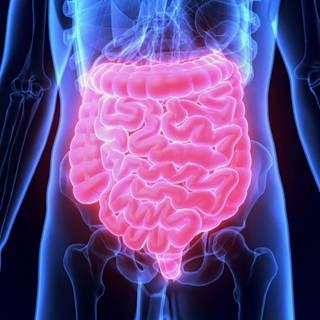 Blau-rot leuchtende Grafik zur Lage des Darms im menschlichen Körper (Foto: SWR)
