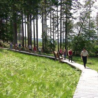 Ranger führt Wandergruppe auf befestigten Wegen durch eine Feuchtwiese im Nationalpark Hunsrück-Hochwald (Foto: SWR)