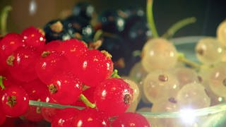 Rote und weiße Johannisbeeren - Detail-Ansicht (Foto: SWR)