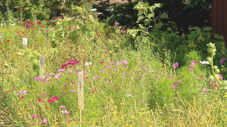 Blühender Garten mit vielen Büschen