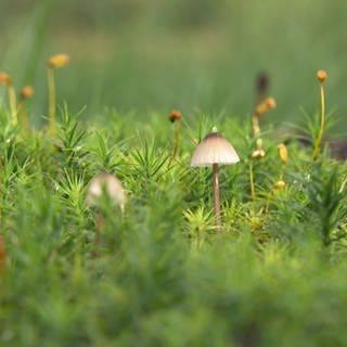 Moore speichern nicht nur Wasser, sondern auch CO2. Im Nationalpark Hunsrück-Hochwald werden die Hangmoore seit längerem renaturiert. (Foto: SWR)