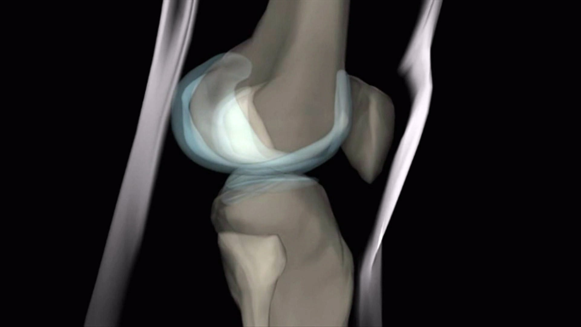 Das Knie – unser größtes Gelenk