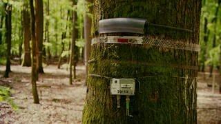 Baumstamm mit Überwachungstechnik (Foto: SWR)