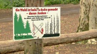 Brandgefahr: Hinweisschild im Wald (Foto: SWR)