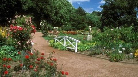 Rosenbüsche im Zweibrücker Rosengarten (Foto: Imago, Imago/Fotograf XY -)