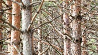 Trockenstress bei Bäumen  (Foto: SWR)