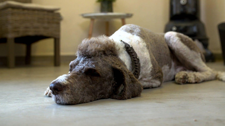 Essingen Hundesalon (Foto: SWR)