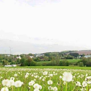 Kesfeld - Eine Ortsansicht (Foto: SWR)