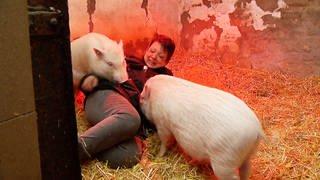 Silke Arnold kümmert sich liebevoll um ihre Schweine. (Foto: SWR)