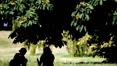 Zwei Frauen unter einem Baum (Foto: dpa Bildfunk, picture alliance/Oliver Berg/dpa)