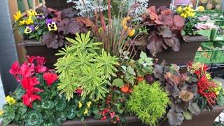 Ein bepflanzter Blumenkübel steht in einem Gartencenter. (Foto: SWR, SWR/Jutta Kaiser)