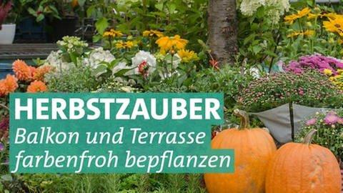 Verschiedene Herbstpflanzen in einem Topf. (Foto: Colourbox)