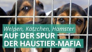 Marktcheck deckt auf: Das Geschäft mit unseren Haustieren (Foto: Imago, Ardea)