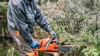 Mann mit Motorsäge zerkleinert einen Baum: Streit unter Nachbarn - Was tun bei Gefahr durch Bäume oder bei Lärmbelästigung? (Foto: Colourbox, COLOURBOX10187197)