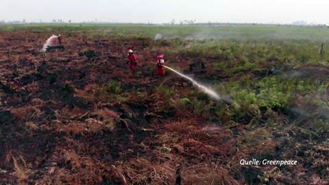 Brandrodung in Indonesien, dokumentert von Greenpeace (Foto: Pressestelle, SWR, Greenpeace)