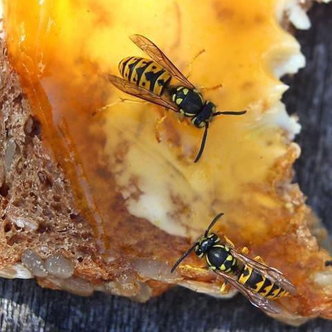 Durch das Wespenjahr sind in den Apotheken die Allergie-Notfallsets ausverkauft. (Foto: picture-alliance / dpa, picture-alliance / dpa -)