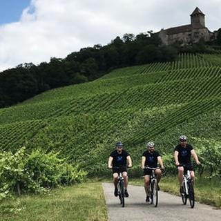 Drei Männer auf Fahrrädern, im Hintergrund Weinberge und Burg Lichtenberg (Foto: SWR, SWR -)