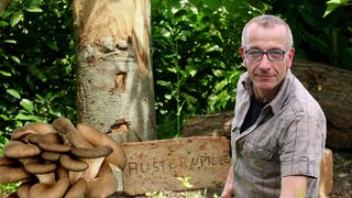 "Mann im Grünen mit Austernpilzen sowie Aufschrift ""Austernpilze"" hinter ihm (Foto: Colourbox, SWR)"