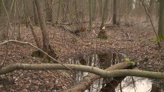 Niedriges Grundwasser (Foto: SWR)