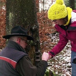 Rangerarbeit im Naturpark Hunsrück (Foto: SWR, SWR -)
