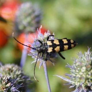 Käfer auf Pflanze (Foto: SWR, SWR -)